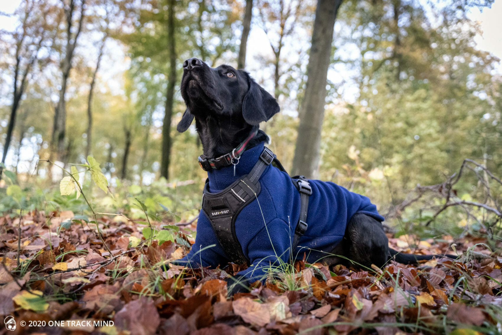 Bark + Ride Lewis Adventure Harness Review