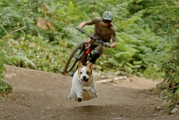 A Dog's Tale with Shimano 01