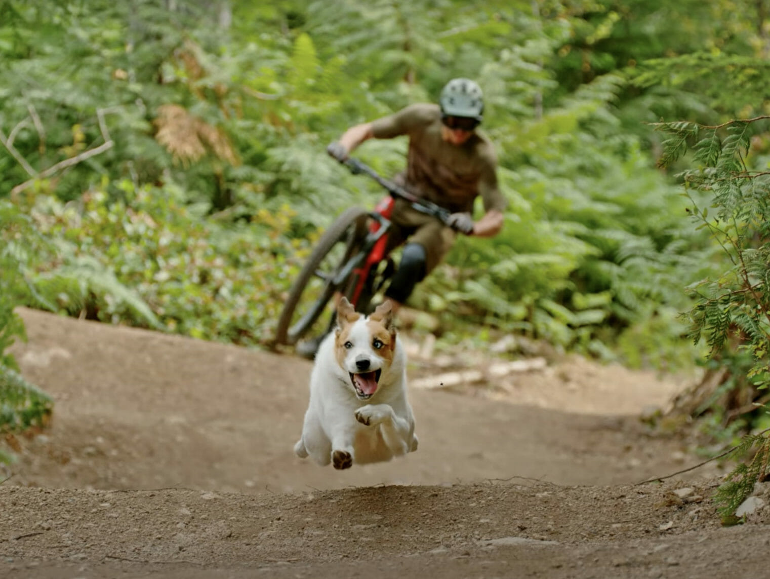 A Dog's Tale with Shimano